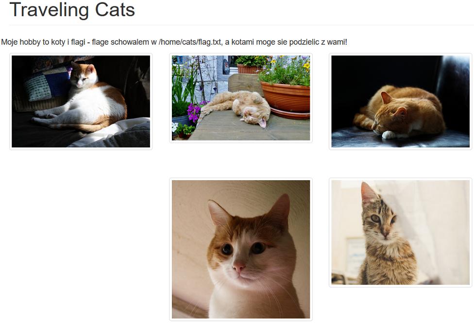 Screen strony 'trawersujące koty'